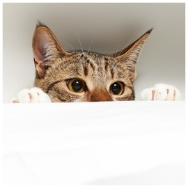Найди котика: 30 смешных фото