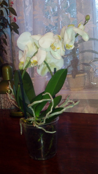 Цветок мне подарили