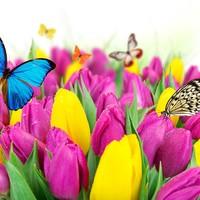 БабочкиВживоте