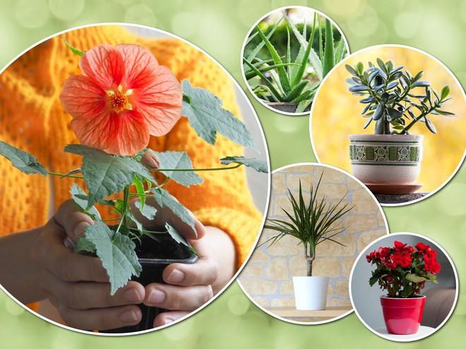 Выращиваем дома: самые неприхотливые комнатные растения