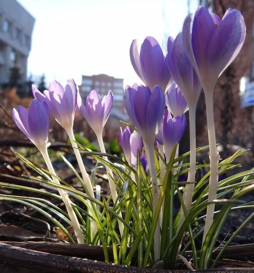 Весна!!)