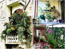 Идеи для вдохновения: сад мечты на обычном балконе