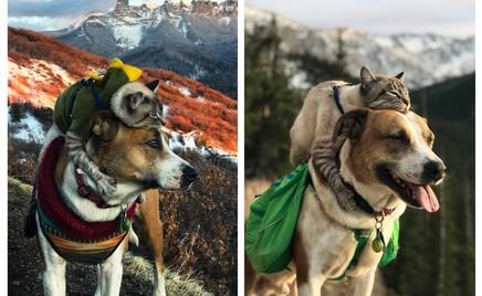 Пёс Генри и кот Балу: неразлучные друзья-путешественники