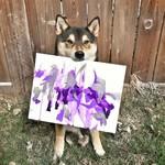Пес-абстракционист