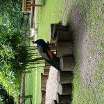 Мини зоопарк Херфорд