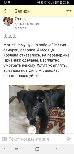 Помогите щенку!😪😥